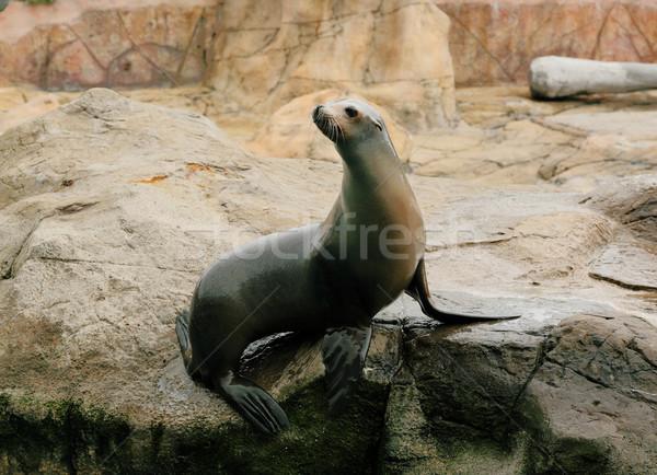 Stock photo: sea lion
