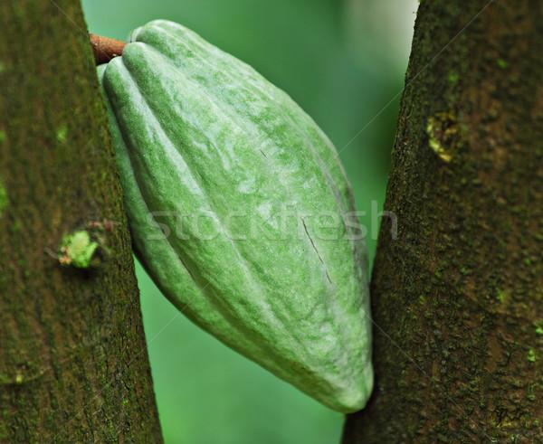 Vaina árbol alimentos naturaleza frutas jardín Foto stock © leungchopan