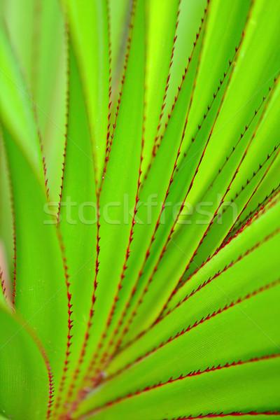 Zöld levél absztrakt természet levél nyár minta Stock fotó © leungchopan
