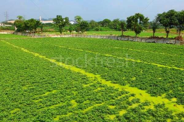 Field Stock photo © leungchopan