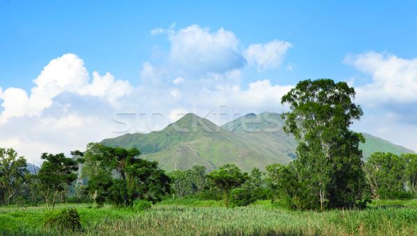 Generale panorama albero foresta montagna verde Foto d'archivio © leungchopan