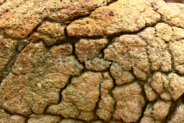 dry and cracked land Stock photo © leungchopan