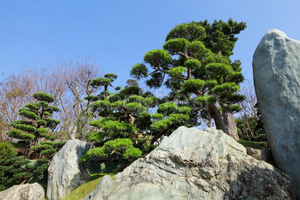 Chinese tuin plant gras foto asian Stockfoto © leungchopan