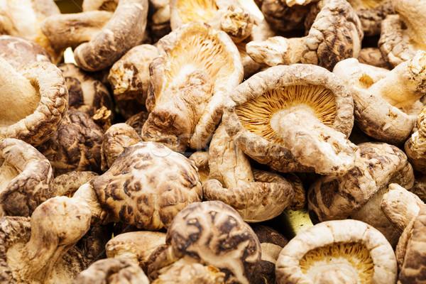 Dried mushroom Stock photo © leungchopan