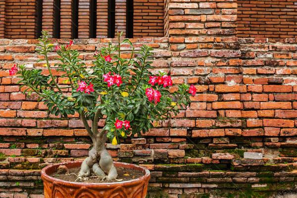 Rózsaszín virág virágcserép virág textúra épület tégla Stock fotó © leungchopan