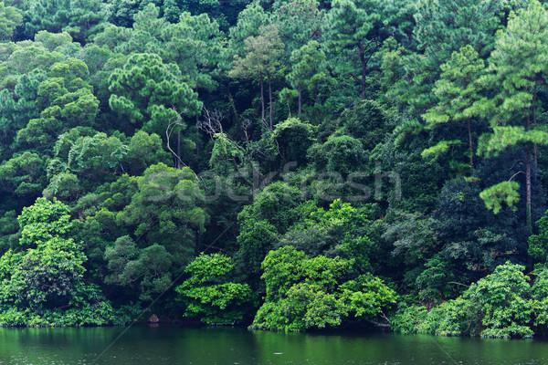 Lago árbol agua primavera madera forestales Foto stock © leungchopan