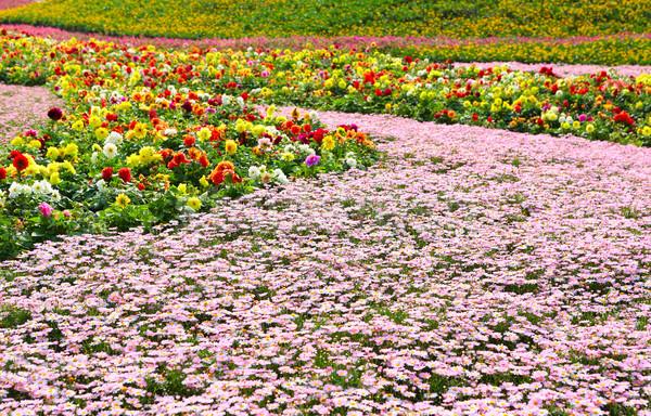природы красоту области пространстве зеленый Сток-фото © leungchopan