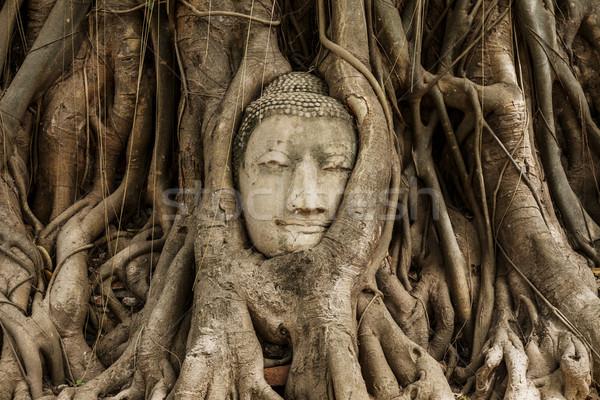 Buddha head in banyan tree at Ayutthaya Stock photo © leungchopan