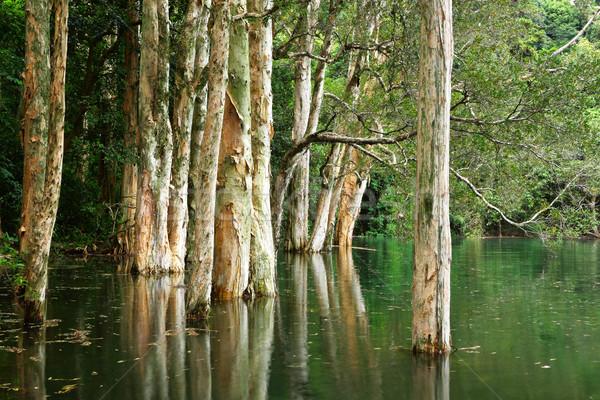 tree and water Stock photo © leungchopan