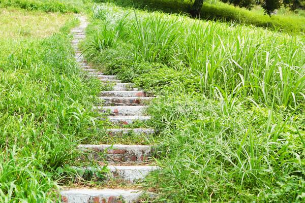 Stock fotó: Lépcső · szabadtér · út · természet · kert · kő