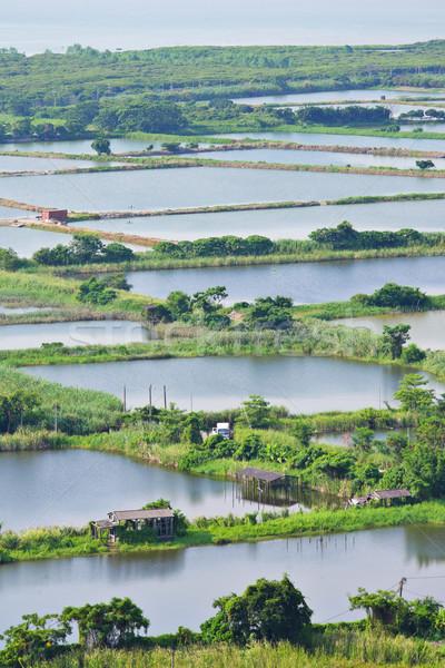 Fish Hatchery Pond Stock photo © leungchopan