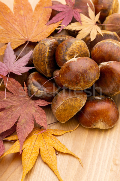 Castaño otono fondo mesa rojo Shell Foto stock © leungchopan