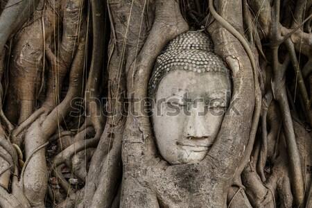 Buddha head statue in banyan tree at Ayutthaya Stock photo © leungchopan