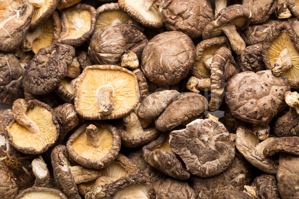 Dried mushroom Stock photo © leungchopan