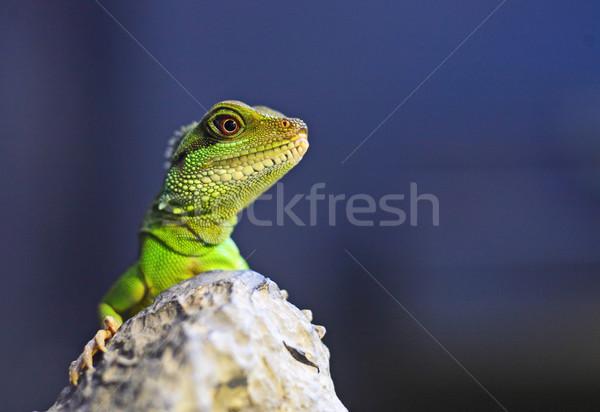 ストックフォト: 緑 · イグアナ · ツリー · 背景 · 動物 · 規模
