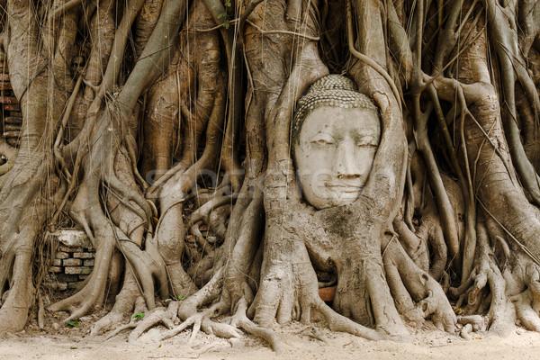 Old tree with buddha head in Ayutthaya Stock photo © leungchopan