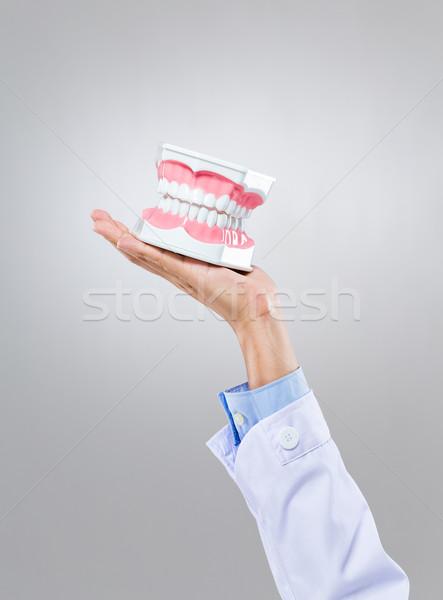 Dentista mantener médicos cuerpo modelo empresario Foto stock © leungchopan