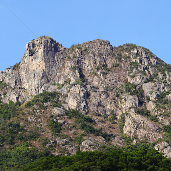 Leeuw rock symbool Hong Kong geest stad Stockfoto © leungchopan