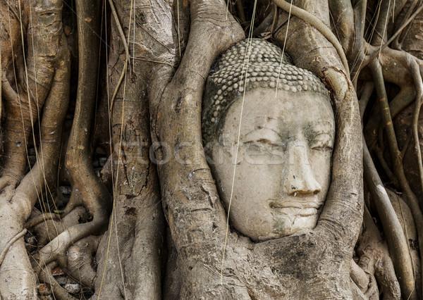 Buddha head in banyan tree Stock photo © leungchopan