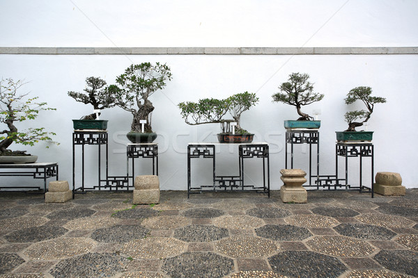 bonsai in a chinese style garden Stock photo © leungchopan