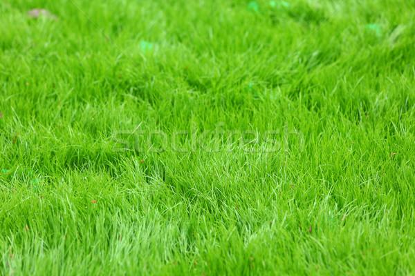fresh spring green grass Stock photo © leungchopan