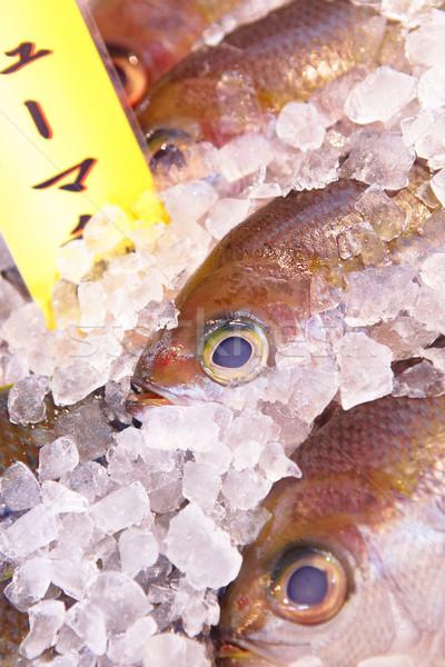 Peixe vender Japão mercado natureza mar Foto stock © leungchopan