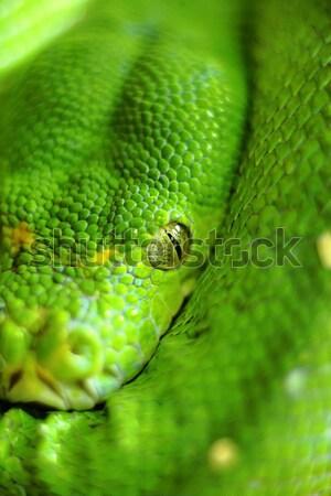 Snake Stock photo © leungchopan