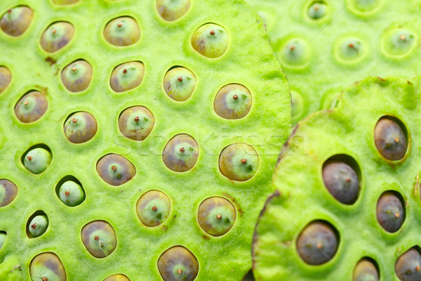Lotus zaad peul water voedsel Stockfoto © leungchopan