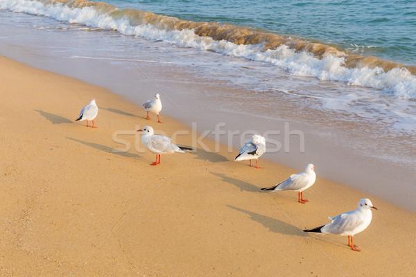 Gaivota praia natureza mar oceano pássaro Foto stock © leungchopan