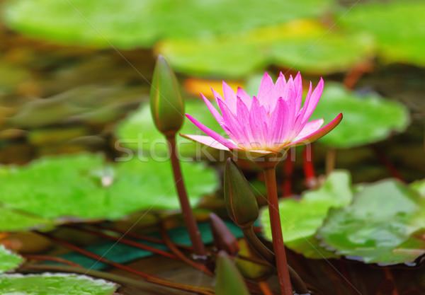Stagno primavera foglia verde lago impianto Foto d'archivio © leungchopan