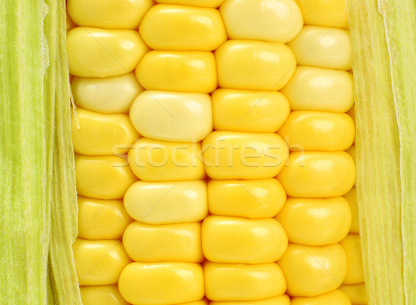 corn Stock photo © leungchopan