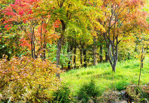 Colourful forest in Autumn Stock photo © leungchopan