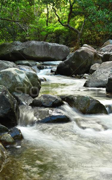 Сток-фото: воды · весны · лес · трава · солнце · лист