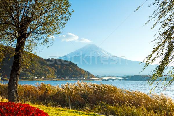 Mt. Fuji in autumn Stock photo © leungchopan