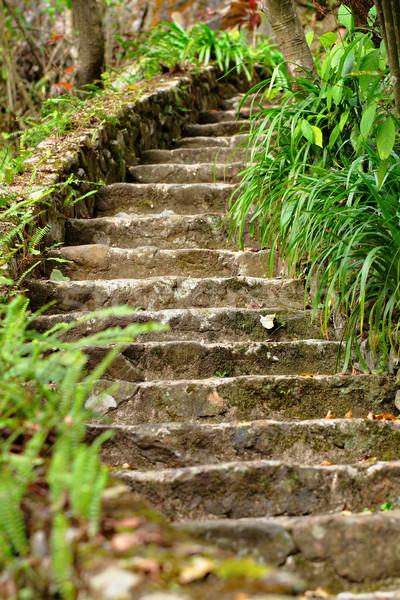 Zdjęcia stock: Kamień · schodów · zewnątrz · drogowego · charakter · ogród
