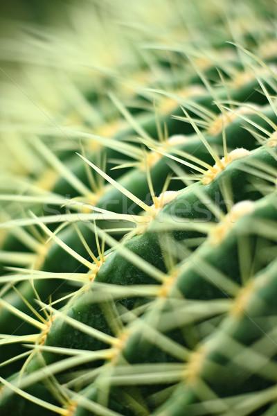 cactus close up Stock photo © leungchopan