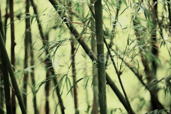 Bambu textura árvore madeira natureza folha Foto stock © leungchopan