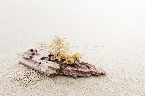 коралловые пляж песок расслабиться волна Сток-фото © leungchopan