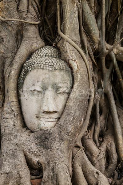 Buddha hoofd oude boom muur asian Stockfoto © leungchopan