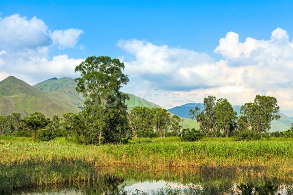 Wetlands under the clear blue sky Stock photo © leungchopan
