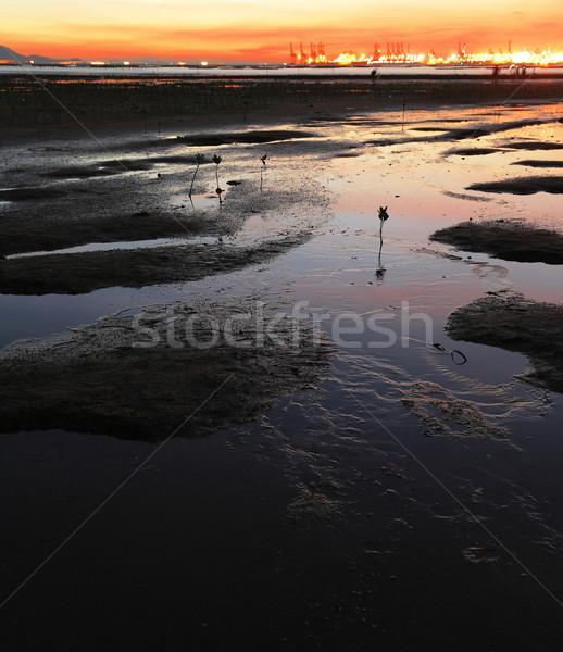 last mangrove in the world Stock photo © leungchopan