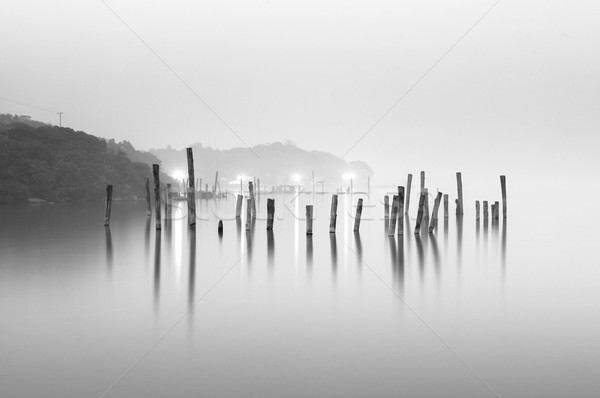wood in water, black and white Stock photo © leungchopan