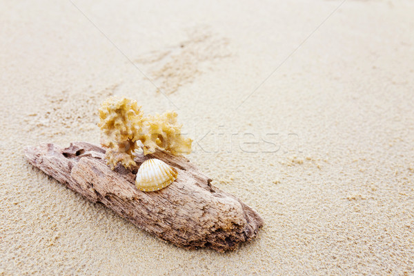 Driftwood and coral on beach Stock photo © leungchopan