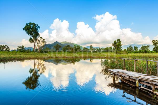 Wetlands and green forest Stock photo © leungchopan