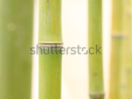 Bambù natura tropicali japanese Asia cultura Foto d'archivio © leungchopan