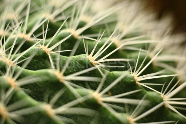 кактус воды дизайна саду пустыне Сток-фото © leungchopan