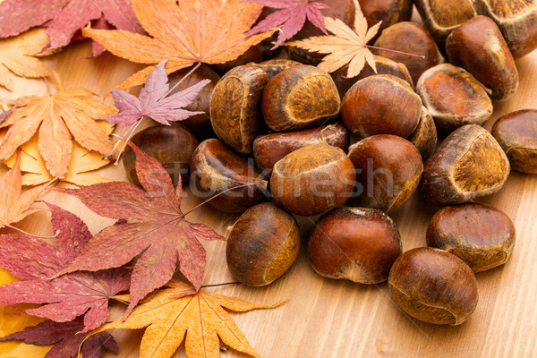 Chestnut and maple leave Stock photo © leungchopan