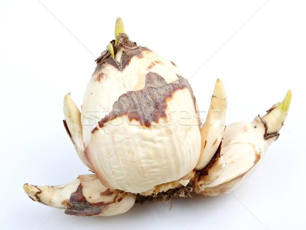 narcissus bulb Stock photo © leungchopan