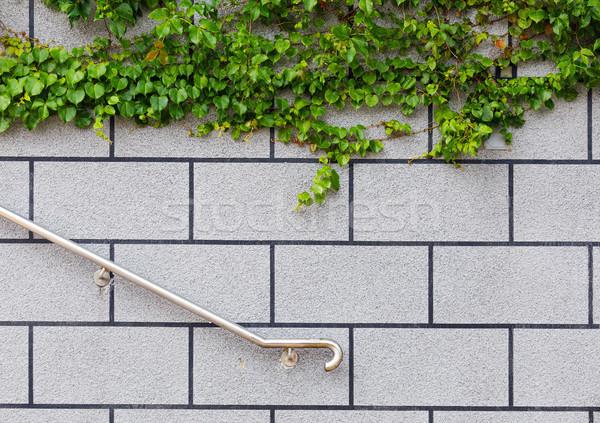 Borostyán zöld növény téglafal fal Stock fotó © leungchopan