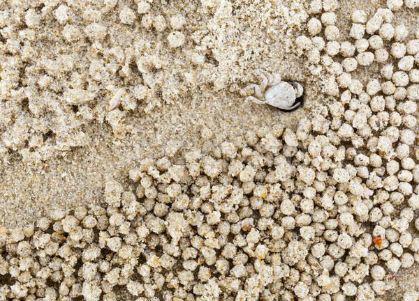 Piccolo bianco granchio movimento sabbia Foto d'archivio © leungchopan